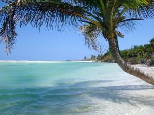 Idyllic tropical bech and palm tree
